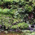 Магия джунглей