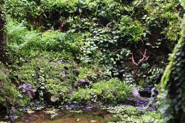 Магия джунглей.